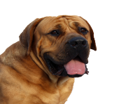 Dog Face PNG Image transparent