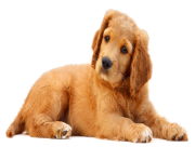 Dog PNG Cute