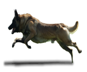 dog running png 3