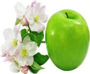 7 green apple png image