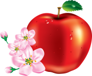 50 red apple png image