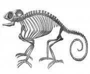 Vintage clip art strange chameleon skeleton halloween the clipartcow