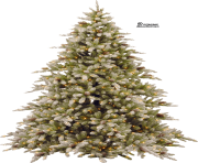 christmas tree png pic