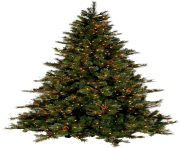 natural christmas tree png picture