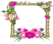 flowers tropical frame png