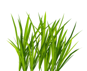 grass png image green grass png picture