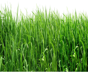 real grass png