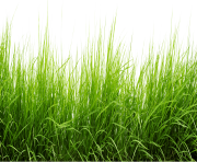 Line Of Grass PNG Image