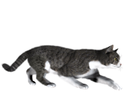 41 cat png image download picture kitten