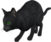29 cat png image download picture kitten