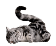43 cat png image download picture kitten