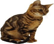 20 kitten png image download picture