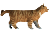 cat png image kitten png