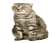 9 kitten png image download picture