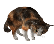 44 cat png image download picture kitten