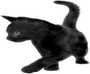 26 cat png image download picture kitten