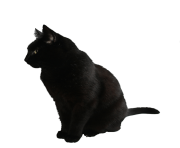 cat png image download picture kitten