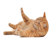 28 cat png image download picture kitten