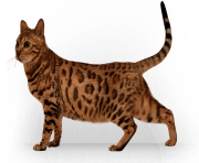 kitten png image download picture