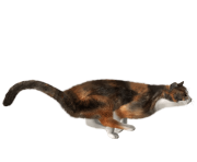 18 cat png image download picture kitten