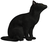 black cat png photo