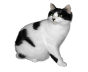 black and white cat png