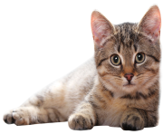 cute lying cat png