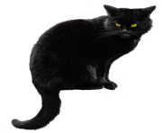 black cat png HD transparent