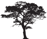 oak africa tree clipart black and white