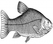 real fish black and white clipart