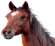 Animal Horse Png Transparent 9