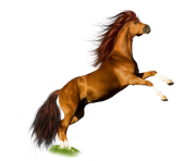 horse PNG302