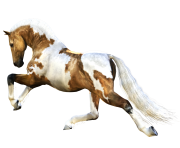 Animal Horse Png Transparent 11