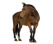 Animal Horse Png Transparent 8