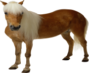 Animal Horse Png Transparent 12