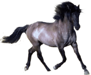 horse PNG305