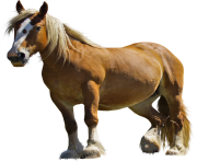 Horse Png Equidae Family 3