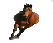 Animal Horse Png Transparent 5