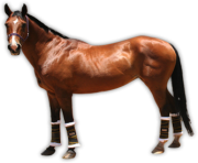 Animal Horse Png Transparent 6