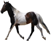 white horse png 5