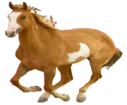 Horse Png Equidae Family 11