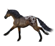 Animal Horse Png Transparent 3