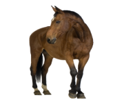 Animal Horse Png Transparent 4