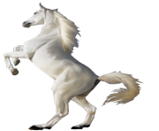 white horse png 4