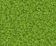 seamless green grass png top view