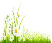 Spring Grass with Camomile PNG Clipart